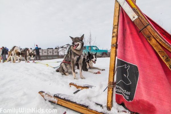 Hemsedal Huskies, dog sledging tours in Hemsedal, Norway