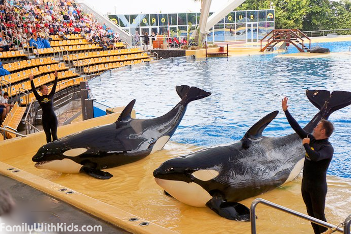 The Loro Parque Zoo, oceanarium and dolphinarium in Tenerife, Spain